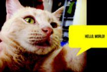 Adorable Cat Selfies