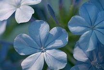 Gardening Tips & Flowers