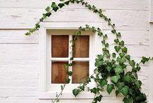 Exteriors - Windows