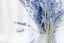 House of Purple flowers / Aesthetic | lilac | lavender