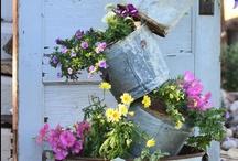 Garden / by Deanna Campbell