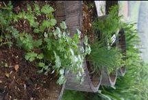 Herbes aromatiques Le Coteau de Belpech / Leurs bienfaits santé