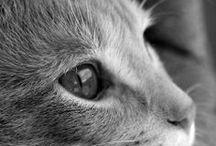 Animals / by Adrienne Haupt