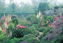 A:::Garden,plants★ / by tutti0514
