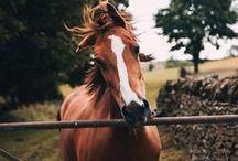 HORSE / О любви)