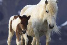 Paarden / Ik hou heel erg veel van paarden en bij dit bord zijn allerlij paarden foto's  Van wilde paarden tot tamme paarden en van kleine paarden tot werkpaarden