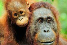Apen / Allemaal apen
