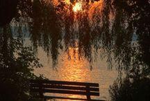 Love Nature / Bäume, Blumen, Himmel, etc. ...