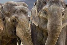 Afrikaanse dieren / Mooie Afrikaanse dieren Zoals: olifant, giraf, zebra, krokodil enzovoort