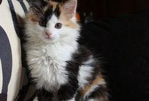 Katten / Allemaal kittens en volwassenen katten