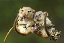 Myšky  / Mouses