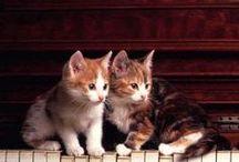 Kočky, čičííííí :)   /  Cats :)