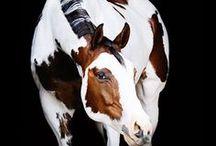 Horse Color