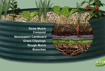 Gardening... the Great Outdoors / General Yard Concepts  / by Julia McCormick