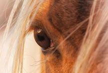 Horses, horses, horses / My love for horses