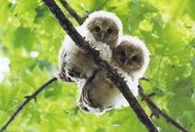 Owls / by Jill Rogers