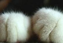 ~~Fur Babies~~ / by Amber Buchmann