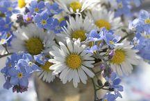 For Spring