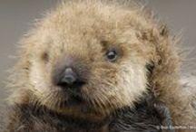 Teddy Bears of the Sea / by Rachelle Walsh