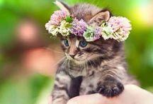 Kittens for mel / Cute!
