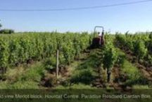 #BordeauxBits video clips / #BordeauxBits video clips from ParadiseRescuedTV are a series of short videos about different wonderful aspects of viticulture, wine making and marketing.  Filmed on location in Cardan Bordeaux France.....