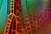 Nature photography and micrographs