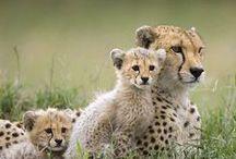 Wildlife Cats