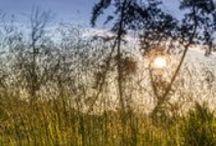 Przyroda / Cisza i spokój – tu słychać szum traw, szelest liści, śpiew ptaków, rozmowy świerszcza ze szczupakiem a przy dobrej pogodzie nawet własne marzenia!