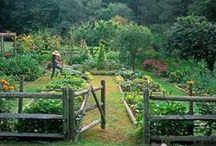 Chickens, Homesteading, Gardening, etc