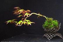 Kokedama / Collection of Japanese moss ball plantings