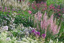 Цветник / Каким бы красивым ни был цветник, он совершенно не будет смотреться без соответствующего фона. В качестве фона можно рассматривать всевозможные формованные и свободные живые изгороди, декоративные ограды, решетки пергол, а также зелень газона или лужайки. Тематика цветника - это природные цветы нашей зоны.