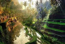 Indonesia / Traveling to Indonesia? All you need to know about your next Indonesia adventure! | The Tattooed Travelers | Travel | Travel Inspiration | Travel Tips | Bucket List | Things To Do | Travel Guide | Inspiration | Itineraries | Adventures |