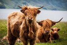 Scotland / Traveling to Scotland? All you need to know about your next Scotland adventure! | The Tattooed Travelers | Travel | Travel Inspiration | Travel Tips | Bucket List | Things To Do | Travel Guide | Inspiration | Itineraries | Adventures |