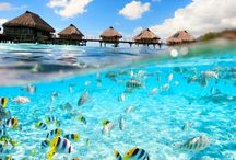 French Polynesia / Traveling to French Polynesia? All you need to know about your next French Polynesia adventure! | The Tattooed Travelers | Travel | Travel Inspiration | Travel Tips | Bucket List | Things To Do | Travel Guide | Inspiration | Itineraries | Adventures |