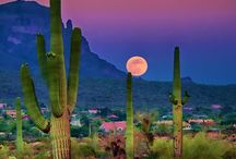 Arizona / Traveling to Arizona? All you need to know about your next Arizona adventure! | The Tattooed Travelers | Travel | Travel Inspiration | Travel Tips | Bucket List | Things To Do | Travel Guide | Inspiration | Itineraries | Adventures |