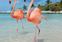 Aruba / Traveling to Aruba? All you need to know about your next Aruba adventure! | The Tattooed Travelers | Travel | Travel Inspiration | Travel Tips | Bucket List | Things To Do | Travel Guide | Inspiration | Itineraries | Adventures |