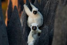 Madagascar / Traveling to Madagascar? All you need to know about your next Madagascar adventure! | The Tattooed Travelers | Travel | Travel Inspiration | Travel Tips | Bucket List | Things To Do | Travel Guide | Inspiration | Itineraries | Adventures |