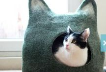 Cool Stuff For Your Cat