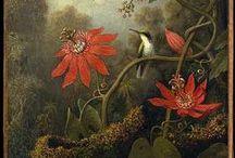Drawings of flowers, birds, shells