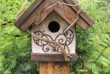 Birds and there houses