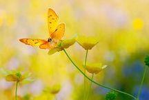 yellow makes me glad.....