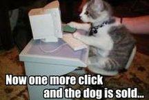 Funny Cat Pics / #humor #cat #kitty