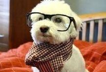Funny Dog Pics / #dog #puppy
