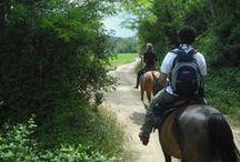 Horses & Vineyards / Horseback riding tour in Tuscany www.florencetown.com