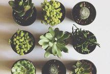 [ grow ] / ✖️✖️✖️