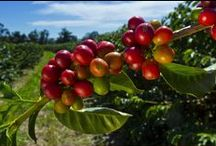 www.PerfectDailyGrind.com / Global Coffee News & Information: From Seed to Cup