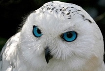 Owls / by It was not Me!