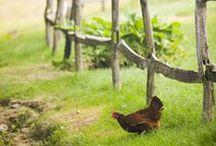 Landleben/Farmlife