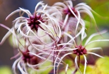 Fleurs et plantes