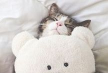 Cats / Furry friends